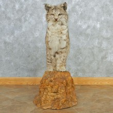 Standing Bobcat Life Size Taxidermy Mount M1 #12811 For Sale @ The Taxidermy Store
