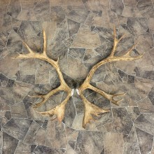Matched Set Caribou Antlers For Sale #23009 @ The Taxidermy Store