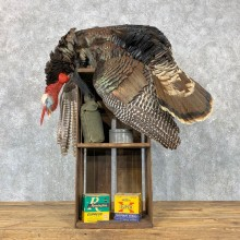 Merriam's Dead Mount Turkey Bird Mount For Sale #23712 @ The Taxidermy Store