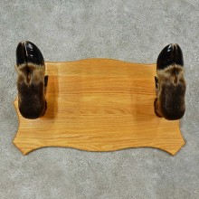 Moose Leg Gun Rack For Sale #16258 @ The Taxidermy Store