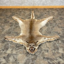 Mountain Lion Full-Size Rug For Sale #24610 @ The Taxidermy Store