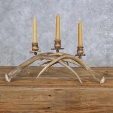 Mule Deer Antler Candle Holder Taxidermy For Sale