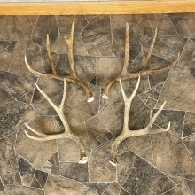 Mule Deer Antler Craft Pack For Sale #25103 @ The Taxidermy Store