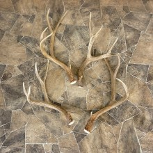Mule Deer Antler Craft Pack For Sale #25104 @ The Taxidermy Store