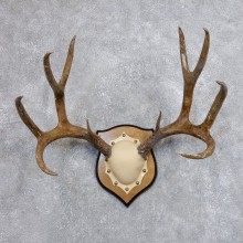 Mule Deer Taxidermy Antler Plaque #18705 For Sale @ The Taxidermy Store