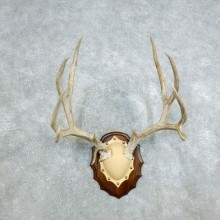 Mule Deer Antler Plaque Mount For Sale #18416 @ The Taxidermy Store