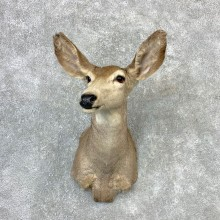 Mule Deer Doe Shoulder Mount For Sale #23261 @ The Taxidermy Store