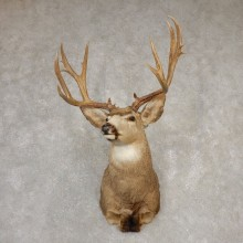 Mule Deer Shoulder Mount For Sale #20521 @ The Taxidermy Store