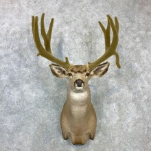 Mule Deer Shoulder Mount For Sale #23077 @ The Taxidermy Store