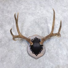Mule Deer Taxidermy Antler Plaque #18713 For Sale @ The Taxidermy Store