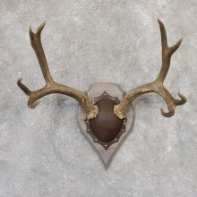 Mule Deer Taxidermy Plaque #19009 For Sale @ The Taxidermy Store