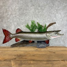 Muskie Reproduction Fish Mount For Sale #21495 @ The Taxidermy Store