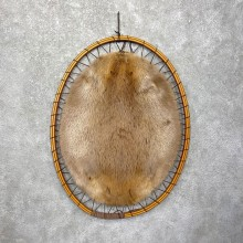 North American Beaver Stretched Hide For Sale #24804 @ The Taxidermy Store