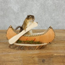 Canoe Chipmunk Novelty Mount For Sale #18176 @ The Taxidermy Store