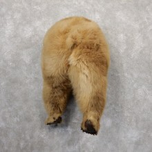 Novelty Grizzly Bear Butt Mount For Sale #18828 @ The Taxidermy Store