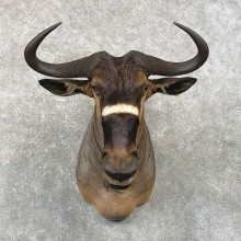 Nyasa Wildebeest Taxidermy Shoulder Mount For Sale