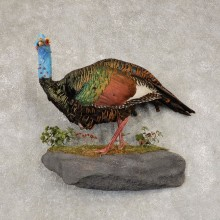 Ocellated Turkey Bird Mount For Sale #21416 @ The Taxidermy Store