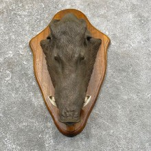 One-of-a-kind Boar Cast For Sale