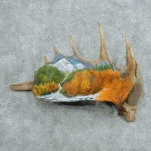 Painted Moose Antler Mount #13740 For Sale @ The Taxidermy Store