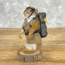 Novelty Red Squirrel Taxidermy Mount For Sale