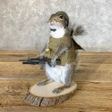 Patriot Squirrel Novelty Mount For Sale #22642 @ The Taxidermy Store