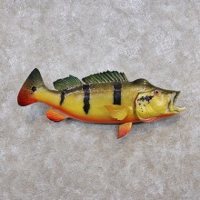 Amazon Peacock Bass Tropical Taxidermy Fish Mount #12277 For Sale @ The Taxidermy Store