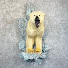 Polar Bear Half-Life-Size Taxidermy Mount #24585 For Sale @ The Taxidermy Store