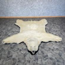 Polar Bear Full-Size Taxidermy Rug Mount For Sale