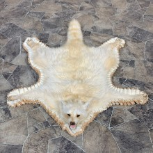 Raccoon Full-Size Rug Mount For Sale #22540 @ The Taxidermy Store
