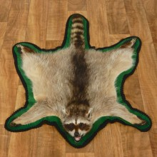 Raccoon Full-Size Rug Mount For Sale #17435 @ The Taxidermy Store