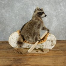 Canoeing Raccoon Novelty Mount For Sale #17841 @ The Taxidermy Store