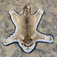 Raccoon Taxidermy Rug For Sale #23664 @ The Taxidermy Store