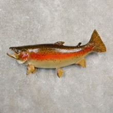 Rainbow Trout Fish Mount For Sale #20569 @ The Taxidermy Store