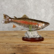 Rainbow Trout Fish Mount For Sale #20617 @ The Taxidermy Store