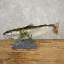 Rainbow Trout Fish Mount For Sale #20619 @ The Taxidermy Store