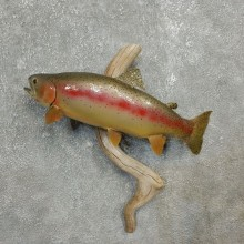 Rainbow Trout Fish Mount For Sale #17783 @ The Taxidermy Store