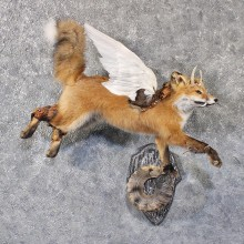 Legendermy Red Fox Flying Mount #11820 For Sale @ The Taxidermy Store