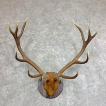 Red Deer Plaque Taxidermy Mount For Sale #21943 @ The Taxidermy Store