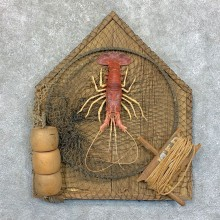Red Lobster Taxidermy Mount For Sale #23552 @ The Taxidermy Store