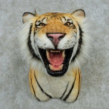 Reproduction Bengal Tiger Shoulder Mount #16421 For Sale @ The Taxidermy Store