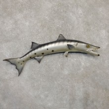 Replica Barracuda Fish Mount #20133 For Sale @ The Taxidermy Store