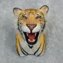 Reproduction Bengal Tiger Shoulder Mount For Sale