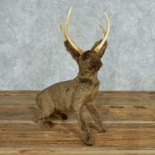 Reproduction Jackelope Taxidermy Mount For Sale