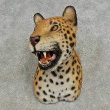 Reproduction Jaguar Shoulder Mount For Sale #16612 @ The Taxidermy Store