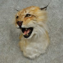 Reproduction Eurasian Lynx Shoulder Mount For Sale #16611 @ The Taxidermy Store