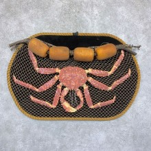 Reproduction Alaskan Red King Crab Taxidermy Mount For Sale #21748 @ The Taxidermy Store