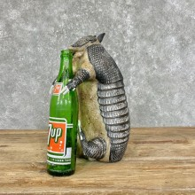 Reproduction Armadillo Life-Size Mount For Sale #25226 @ The Taxidermy Store