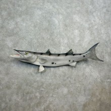 Replica Barracuda Taxidermy Fish Mount For Sale
