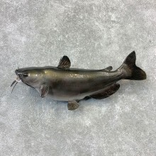 Reproduction Catfish Taxidermy Fish Mount #23268 For Sale @ The Taxidermy Store