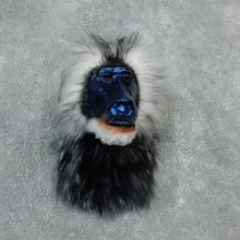 Reproduction Drill Baboon Mount For Sale #18305 @ The Taxidermy Store
